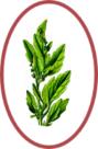 épinards.png