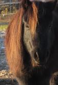 Image rêve de cheval 4
