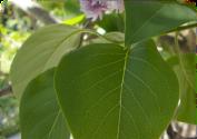 image-chlorophylle