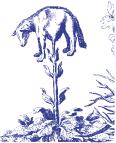 planta tartarica.png
