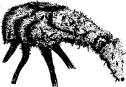 représentation du rhizome à l'envers.png